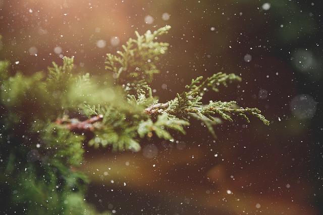 sněžení u stromu