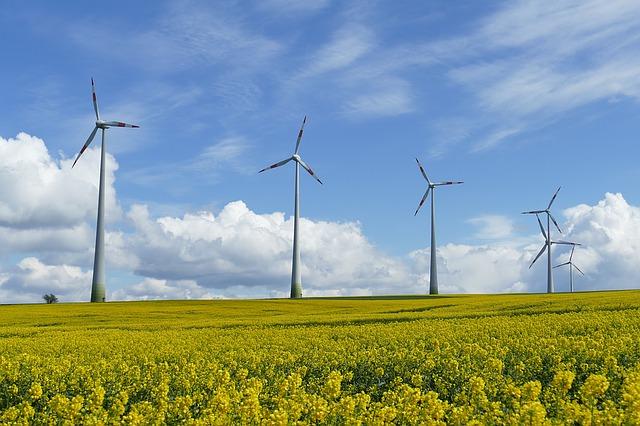 větrné elektrárny v řepkovém poli