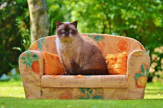sedačka s kočkou