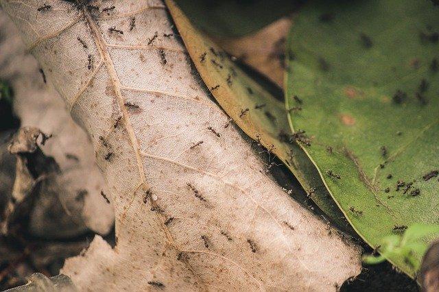 mravenci na listech